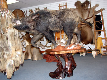 welcome to real wilderness taxidermy